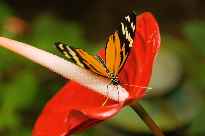 Costa Rica_Butterflies-7.jpg