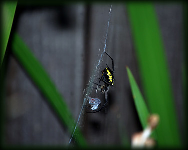 Spiders & Insects