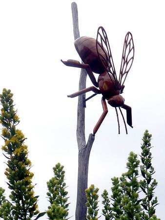 2013-09 Morton Arboretum bugs