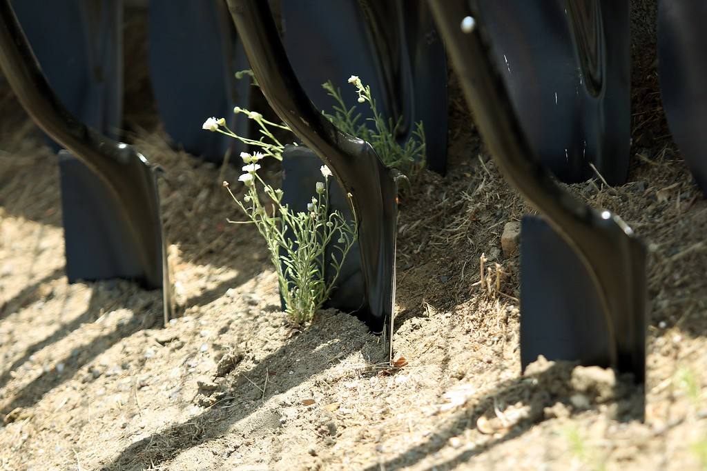 . Shovels in the dirt are pictured at the memorial for the 19 fallen firefighters outside of Granite Mountain Hotshots Fire Station 7 in Prescott, Arizona July 2, 2013. AFP PHOTO / KRISTA  Kennell/AFP/Getty Images