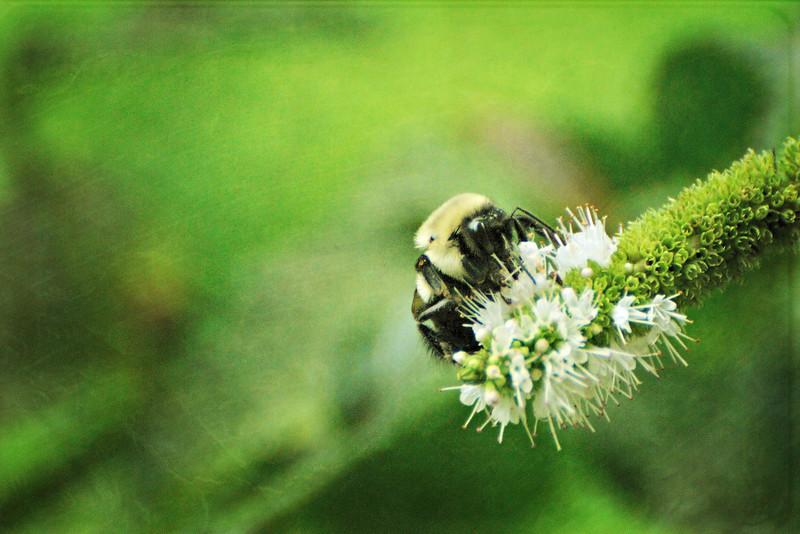 LTD_2012-07-19_0632_3