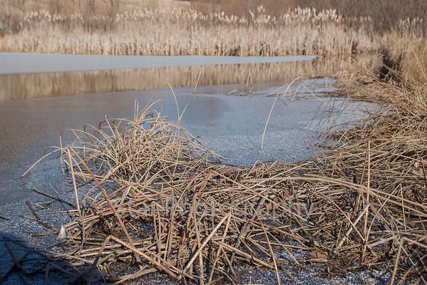 Frozen Pond In Stoney Creek 01-22-14