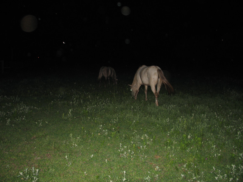 Hedgehog Gathering at PogStar Hedgehogs (06/2005)  Horse Photos  Filename reference: 20050619-110125-HAH-PogStar_Gathering