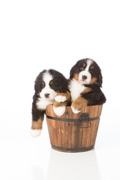 2013-Pearson Pups-Jun02-0432.jpg
