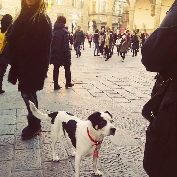 Firenze MOB (86).jpg