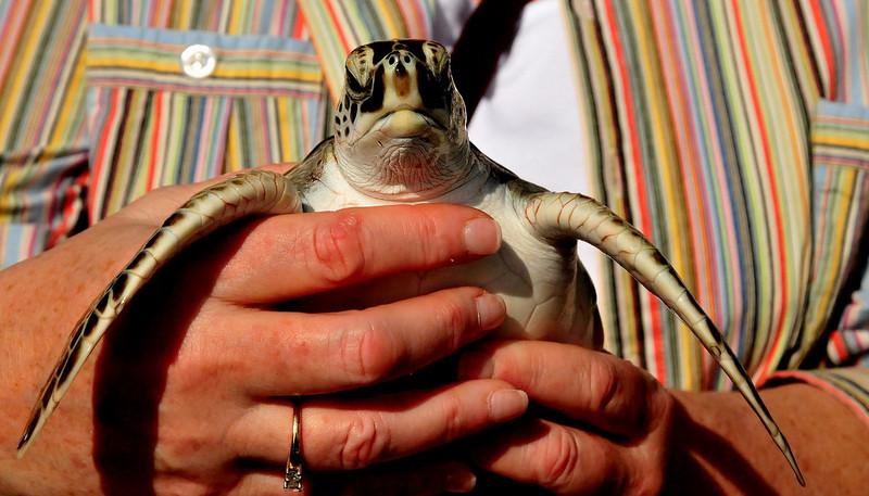 Day4 Grand Cayman 02-10-2009 5.jpg