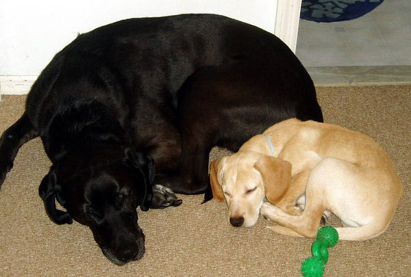 Charlie and Boone.  Probably taken by my mom.