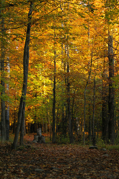 Autumn colours are appearing throughout the Ottawa region. Here the trees that make up the Jack Pine Trail at Stony Swamp turn a vibrant yellow in the setting autumn sun.  Photo taken 5 October 2010.