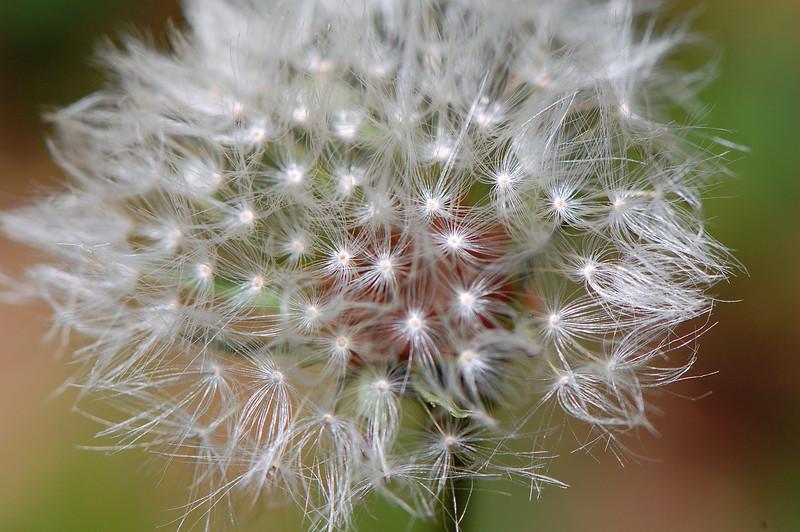 featherflower.jpg
