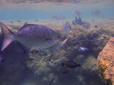 Snorkeling - Ke'e Beach