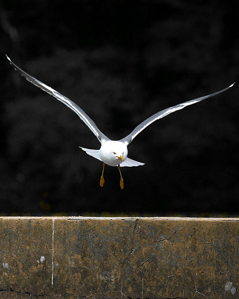 gull_wall.jpg