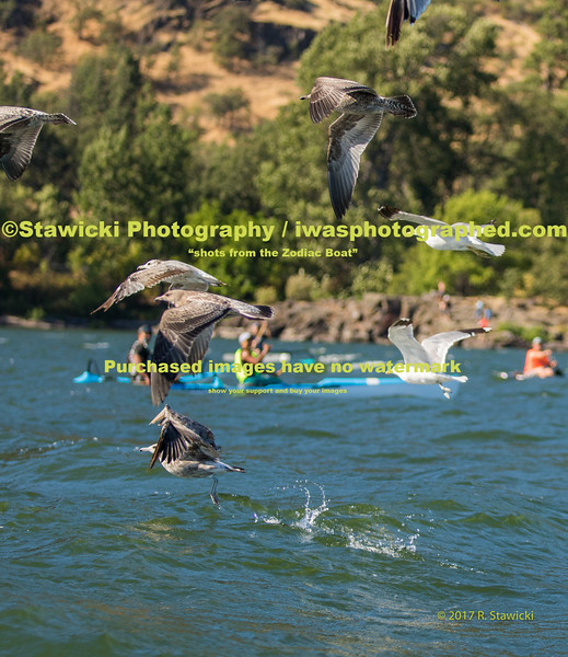 Vento to Hood River Saturday 7.22.17. 267 images
