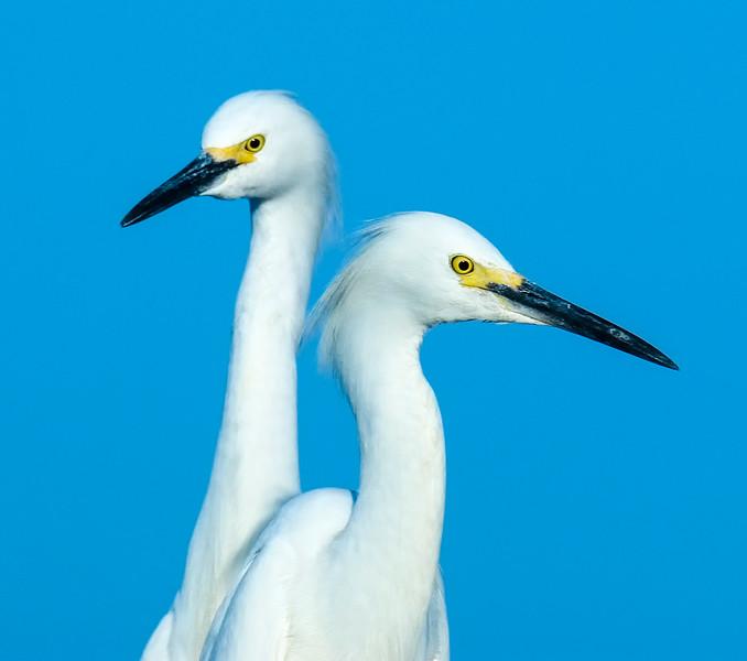 Egret-4.jpg