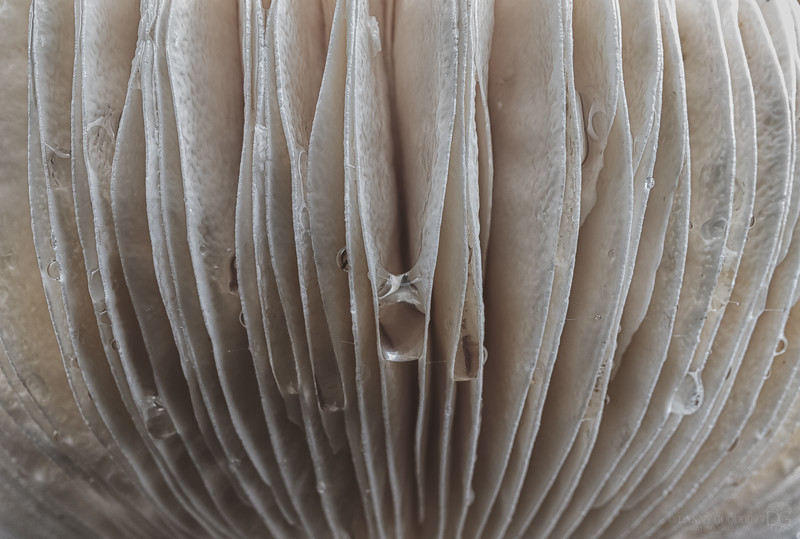 Closeup of gills on a huge upturned mushroom I found in north Georgia