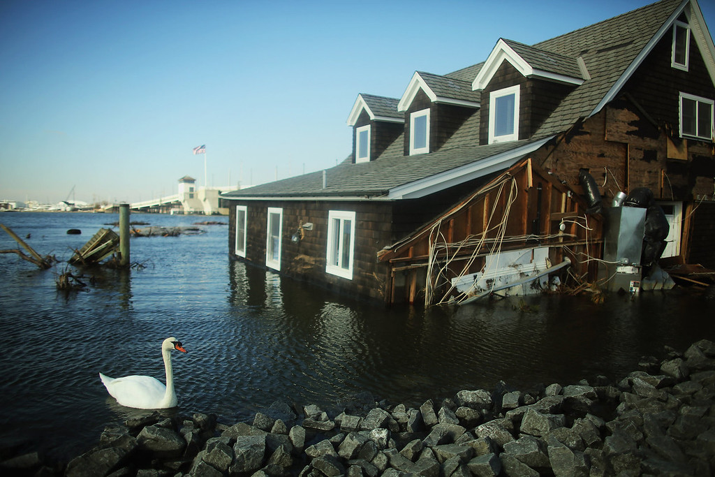 . A swan swims near the flooded home of the Maziekien family on November 21, 2012 in Mantoloking, New Jersey. Mantoloking was one of the hardest hit areas by Superstorm Sandy.    (Photo by Mario Tama/Getty Images)