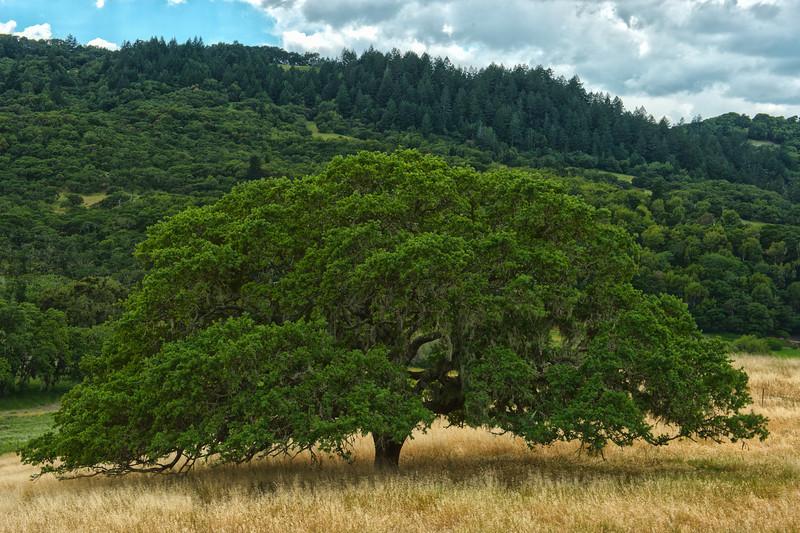 treeHDR.jpg