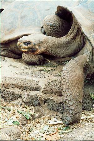 Galapagos Islands 2000