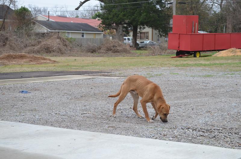 Stray doggie, Natchez, MS