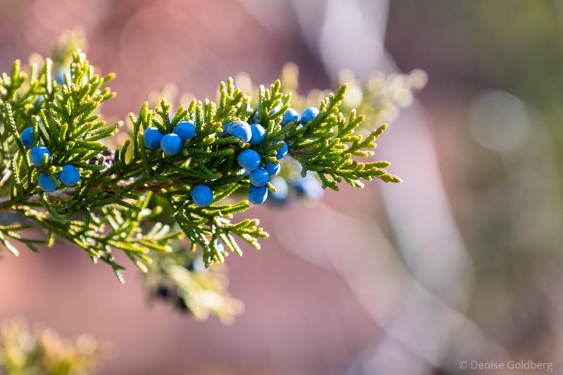berries in blue