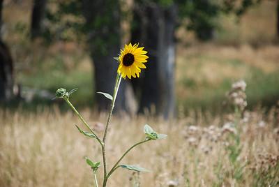 2008 08 12-13:  Trip to Buhrs, Montrose, NE