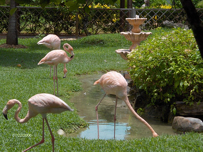 Sunscape Casa del Mar 23-24 julio 2006