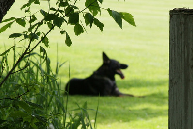 2009 Trial Schutzhund EWWBk June