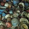 Auschwitz bowls