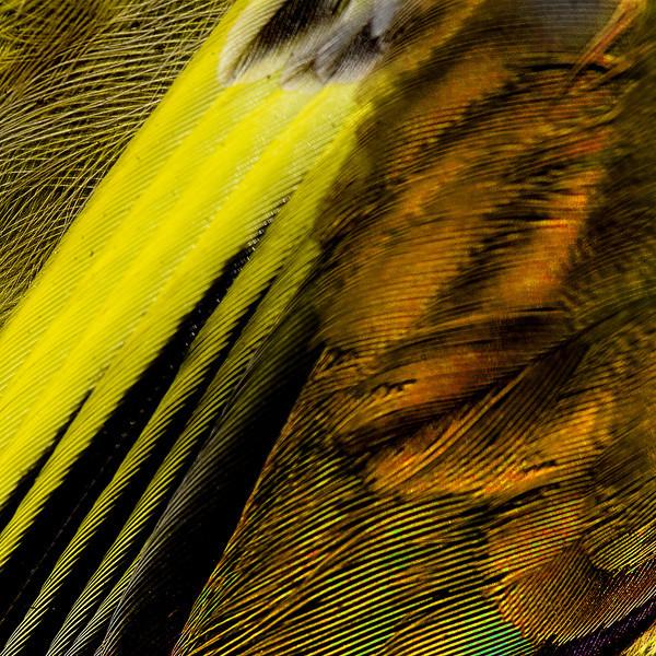 2008-03-31_Hemmavid_0302y.jpg