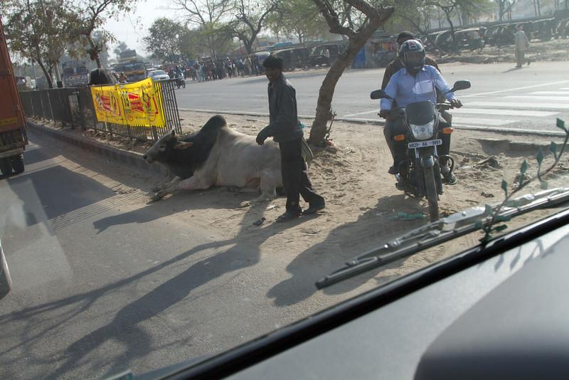 India_2012Feb-5507.jpg