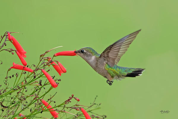 Bird Photo Archives Gallery 2019 and <