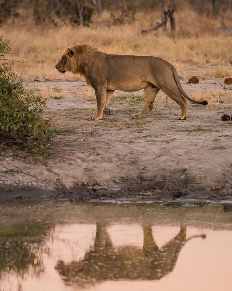 Botswana_June_2017 (4457 of 6179).jpg