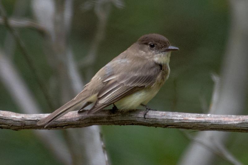 19-Sept North America Birds-6410.JPG