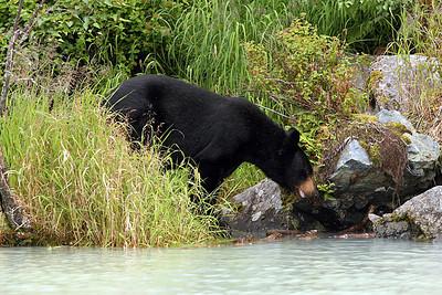 1st BEAR VIEWING 2007