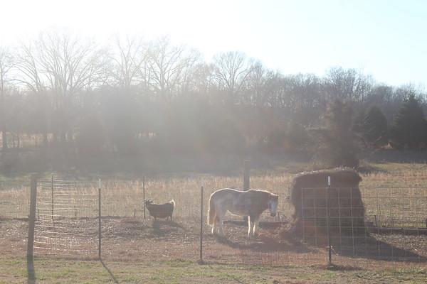 Leah's Goats 012418