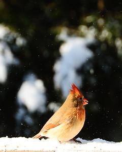Winter Birds Gallery 3