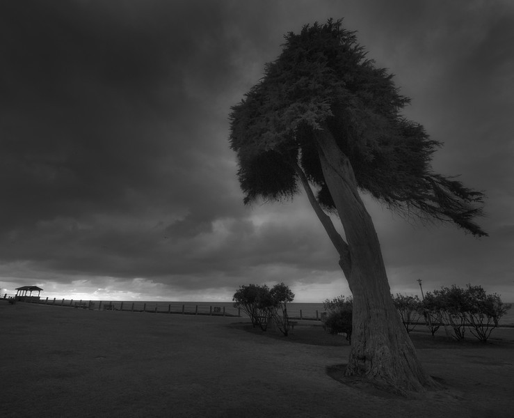 Tree against the wind
