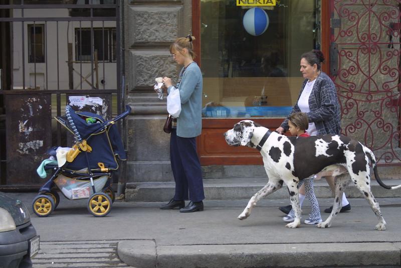 Baby and Dog Vienna, Austria