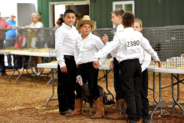 Poultry Show 8-8-2021
