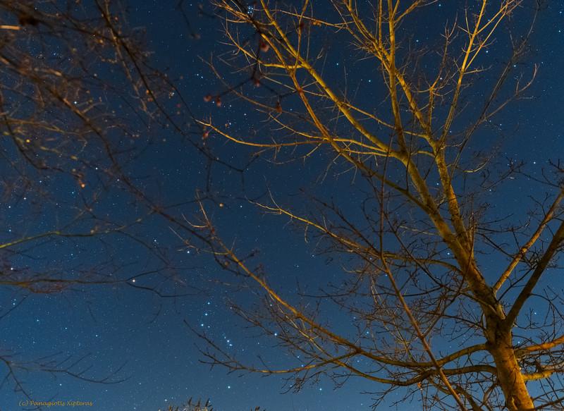 Stars behind the trees.jpg