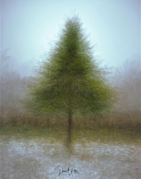 PV Old Growth Xmas Tree