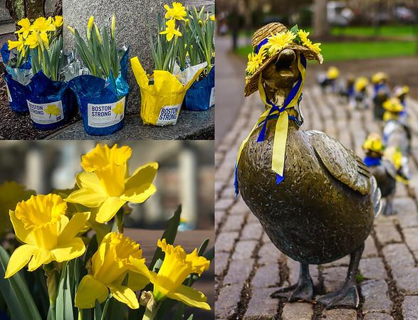 Spring Daffodils