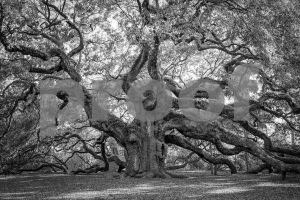 Angel Oak Edits