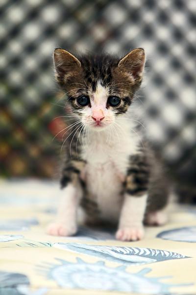kittens_009-1.jpg