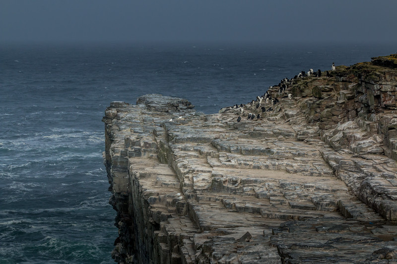 Sea Lion Island, Falklands