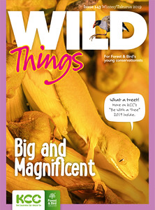 KCC_WildThings_143_Winter2019_cover-S.jpg