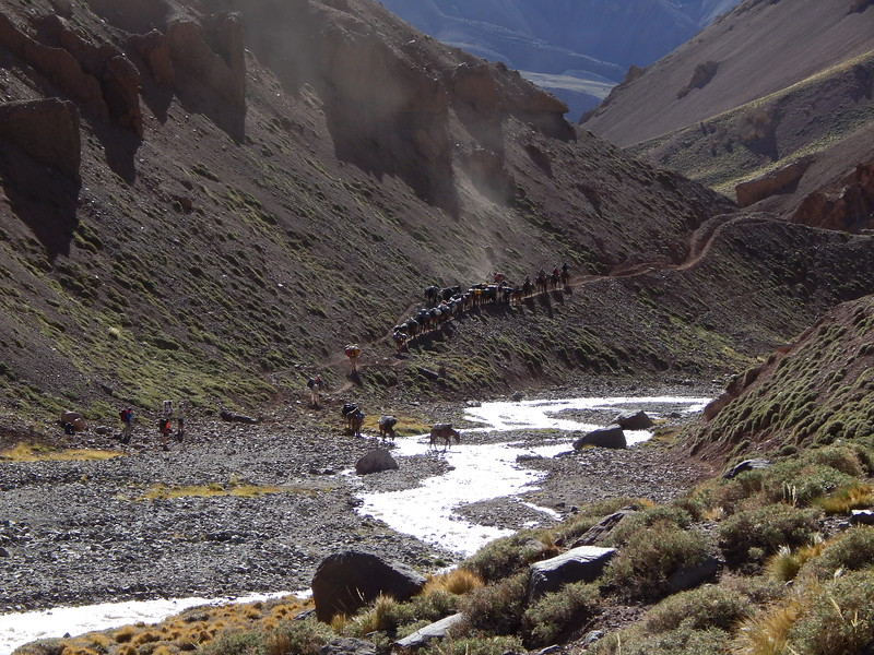 Mules moving towards Base Camp