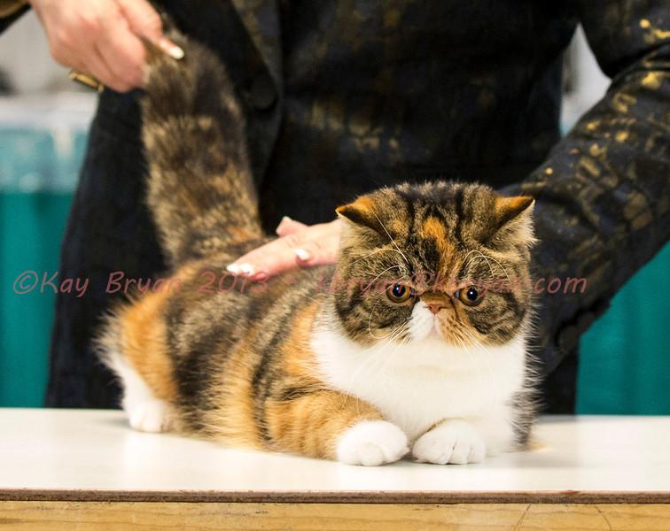 CatShow2014088.JPG