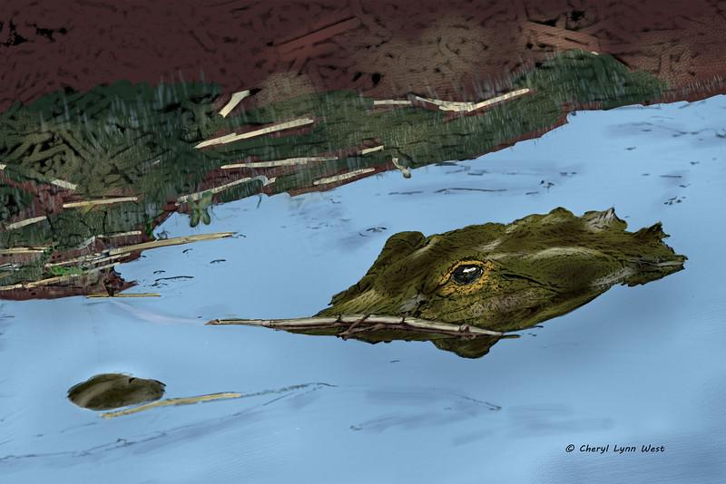 Aligator-sketch.jpg