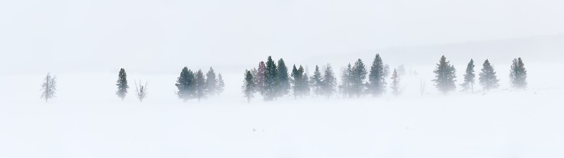 Snowy Treeline Near Arden's Hole on Day 4:  Yellowstone - Winter 2020Snowy Treeline Near Arden's Hole on Day 4:  Yellowstone - Winter 2020