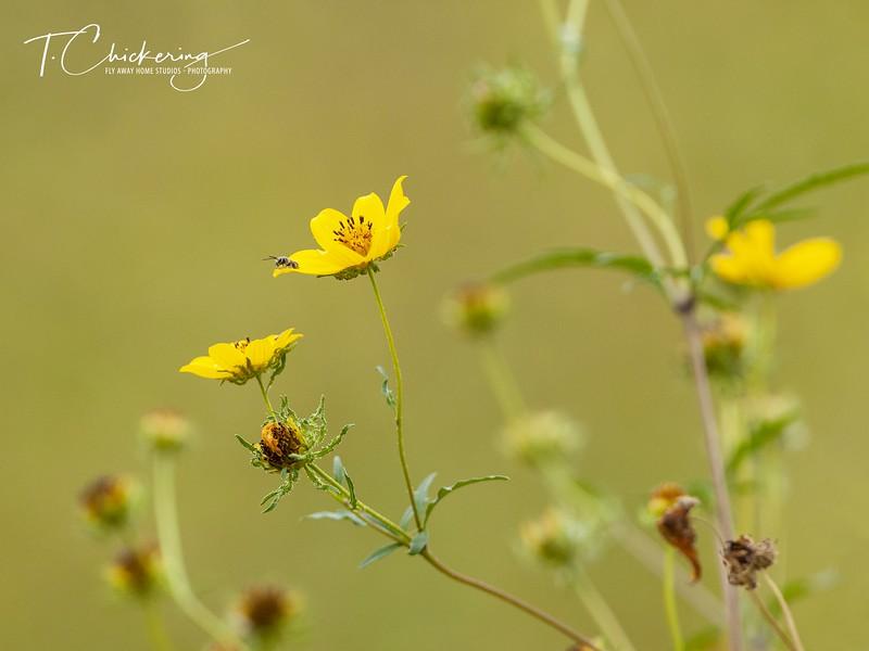 Wildflowers and Bee.jpg